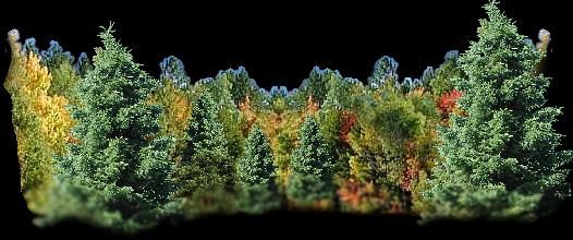 Krajobraz choinek