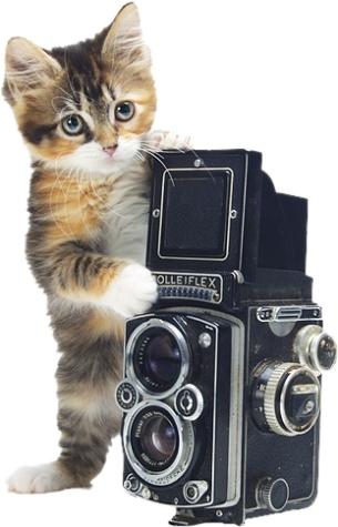 Kot z aparatem fotograficznym