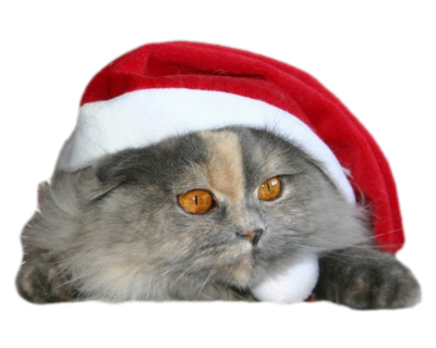 Mikołajkowy kotek z czapką