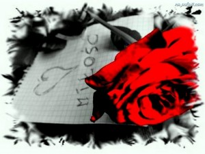 Czerwona róża z napisem Miłość